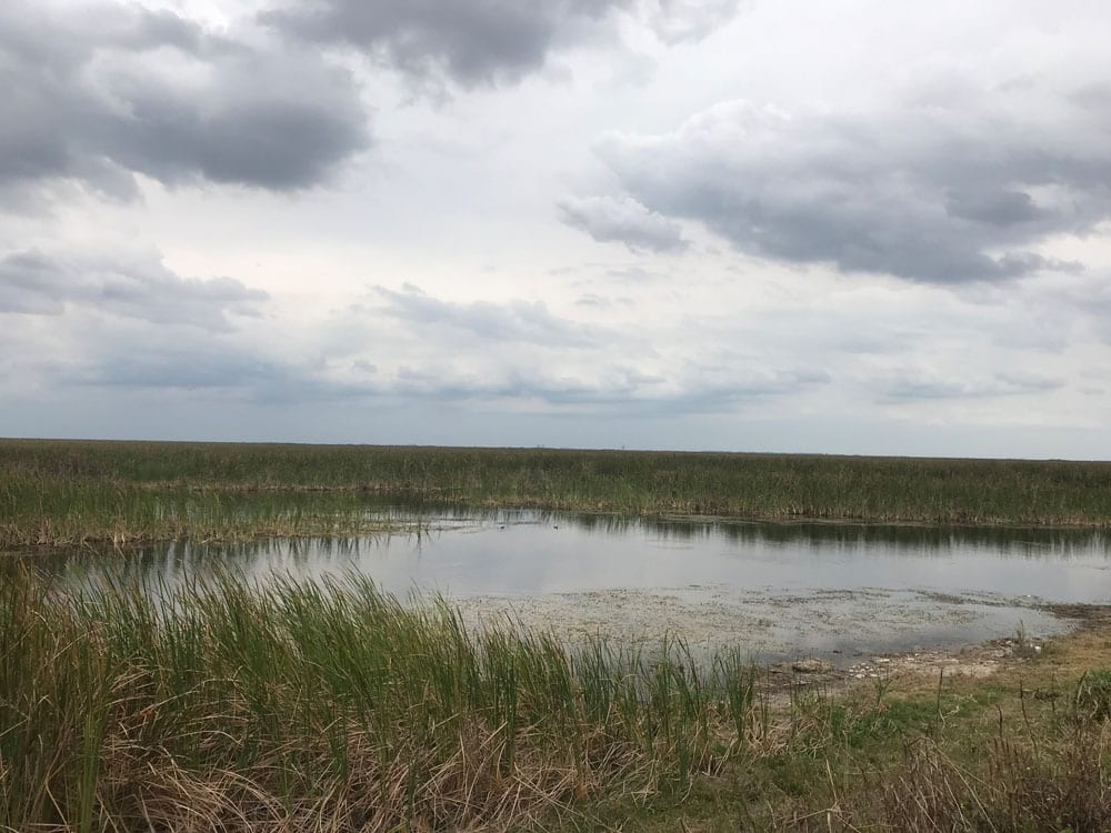 Cloudy skies above a marsh