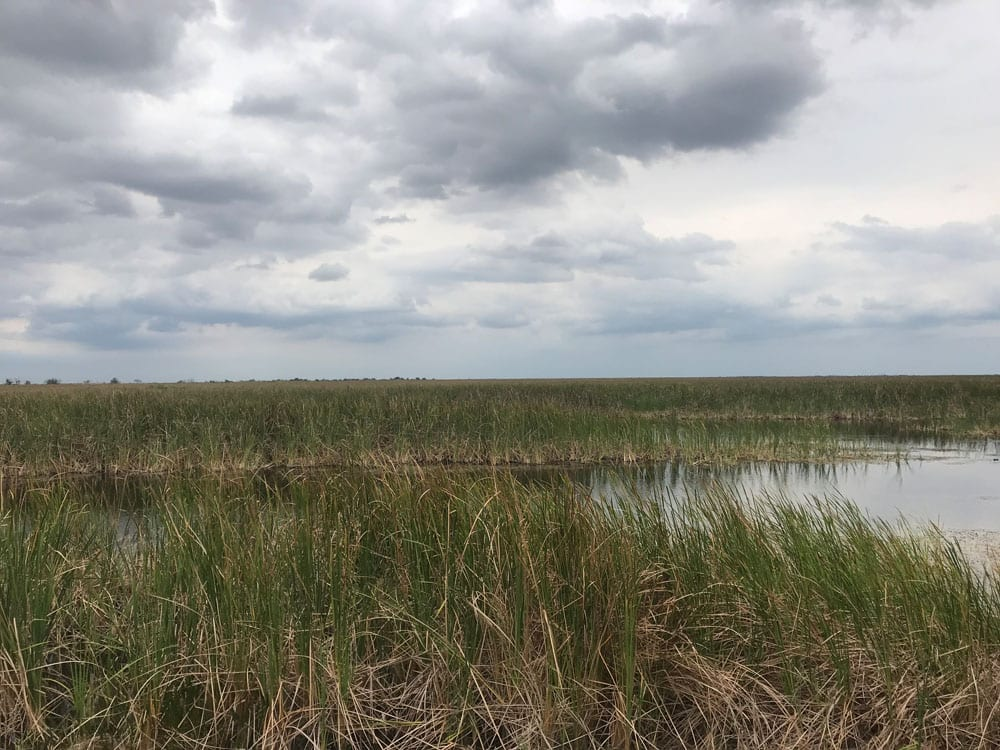 Cloudy skies above a marsh (different side of the marsh)
