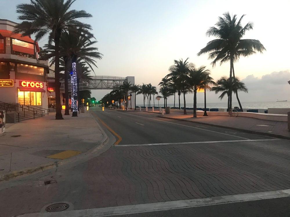 Row of palms beside a row near the beach