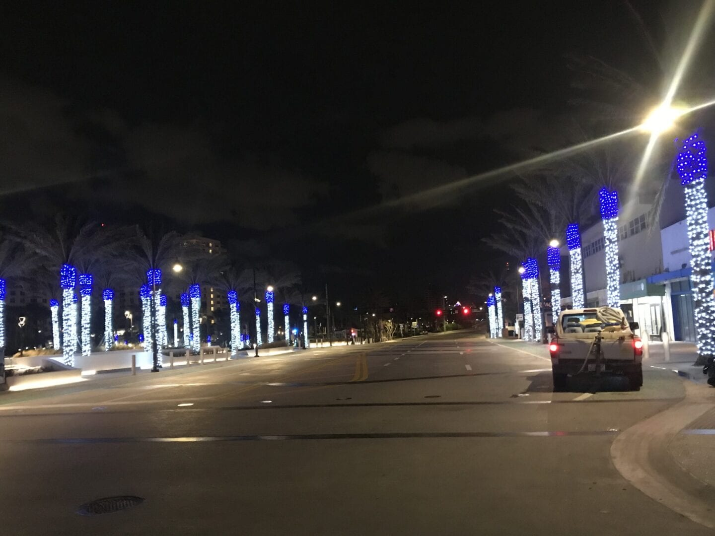 Rows of palm trees with lights on the sides of the road